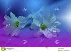 Flowers made with pastel tones.print for wallpaperfloral fantasy design. Hipster Wallpaper, Print Wallpaper, Boho Tattoos, Purple Art, Art Sketchbook, Flower Making, Art Prints, Floral Prints, Nature Photography