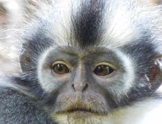 Jungle Treks & Tours from Bukit Lawang N. Sumatra - Experience Wild Jungles, Breathtaking Landscapes and Authentic Culture with TrekSumatra Gunung Leuser National Park, National Parks, Orangutan, Trek, Monkey, Animals, Jumpsuit, Animales, Animaux