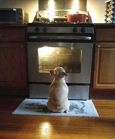 French Bulldog Raw Diet