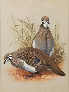 William T. Cooper - artwork prices, pictures and values. Art market estimated value about William T. Cooper works of art. Rare Birds, Exotic Birds, Australian Birds, Australian Artists, Color Pencil Sketch, Nature Artists, Bird Illustration, Bird Prints, Art Auction