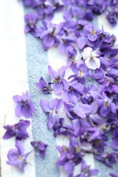 Violet Elixir – Immortalizing Spring