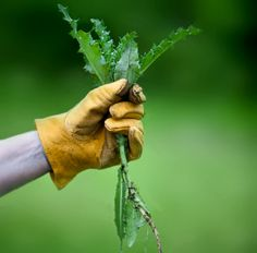 Edible Weeds: You might need this when you camp especially if you get lost on the trails. lol MOM