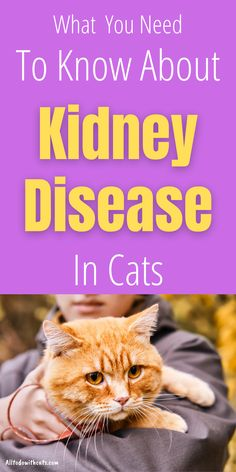 Discover everything you need to know about kidney disease in cats. Including early stages of the disease and what to look for. Diagnosis is often made during early stage kidney disease in cats, and can usually be managed very well. Cat Skin Problems, Cat Behavior Problems, Health Problems, Training A Kitten, Causes Of Kidney Disease, First Time Cat Owner, Cat Health Care, Cat Allergies, Human Babies