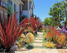 CA Friendly Design Ideas Phormiums have become icons of Mediterranean landscapes, although they hail from New Zealand and require a bit more moisture than sometimes expected. Here, the bronzy colors of Phormium 'Firebird' combines nicely with Leucodendron Succulent Landscaping, Backyard Landscaping, California Front Yard Landscaping Ideas, Tropical Landscaping, Luxury Landscaping, Backyard Ideas, Rogers Gardens, Drought Tolerant Landscape, Water Tolerant Landscaping
