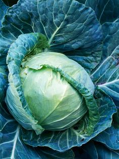 A staple in coleslaw, cabbage is also useful for the mild flavor and crunchy texture it adds when shredded into mixed salads. Choose from green or red cabbage varieties./