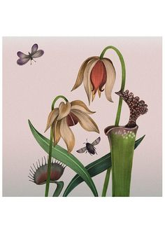 A4 Carnivorous Flowers / Plants Bouquet giclee fine art print A4 Giclee Print of an original graphite illustration, digitally coloured artwork by Allira Tee Colourful artwork of some carnivorous plants and their flowers with some little insects too! Find the venus flytrap, sarracenia and