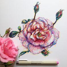 scribble study