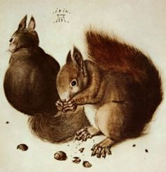 Artwork by Albrecht Dürer Squirrel Art, Fat Squirrel, Albrecht Dürer, Museum, Italian Artist, Cross Stitch Patterns, Illustration, Art Drawings, Art Prints
