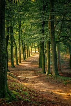 Pins-wood-wald Forest path Other types of Stair lifts By Flemming Andersen A stair lift is some thin Forest Path, Forest Road, Tree Forest, Conifer Forest, Redwood Forest, Landscape Photography, Nature Photography, Tree Tunnel, Image Nature