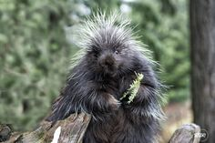 Everyone has a bad hair day once in awhile.  Saturday smile ;o)