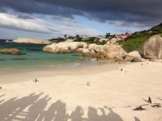 We encountered a colony of African penguins at Boulders Beach, Cape Point! See more from our travel bloggers press trip to Cape Town, South Africa. --> http://www.lacarmina.com/blog/2014/10/steampunk-cafe-cape-town-penguin-beach/   african penguins colony
