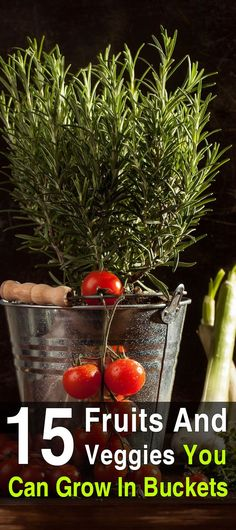 15 Fruits And Veggies You Can Grow In Buckets