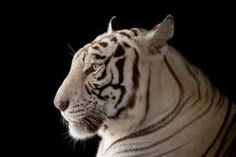 Image result for animal photo ark
