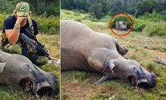Wildlife park worker left distraught after finding three dead rhinos