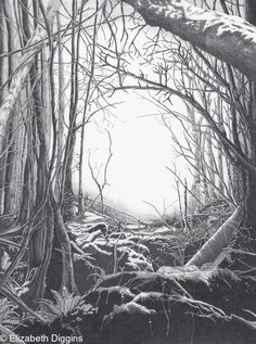 Puzzlewood - Graphite Pencil. Very large pencil drawing. A view of the Forest of Dean, UK