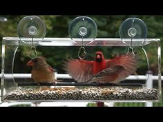 Our window feeder can provide hours of entertainment.  Watch as this Male Cardinal makes his presence known.  http://www.amazon.com/dp/B0108LL5XG
