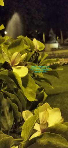 Kékrózsa Bíborvirág Blogja: Lövey-Varga Éva  Virágzó dallamok   (Egy másik vil... World, Plants, Movies, Movie Posters, Film Poster, Films, Popcorn Posters, Planters, Film Books