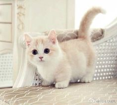 【閒聊】可愛的小喵 @幸福寵物交流區 哈啦板 - 巴哈姆特