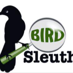 Most Wanted Birds : Cornell Lab of Ornithology: BirdSleuth K-12