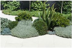 Mixed evergreen combinations-- see how the plantings are free-form and asymmetrical. Let's pair that type of planting with the formal, straight lines created by the brick edging.