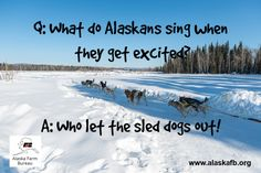 What do you sing when you get excited? Farm Humor, Friday Humor, Get Excited, Alaska, Singing, Travel, Life, Viajes, Trips