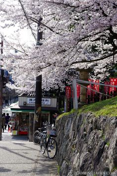 I'm sure even bicycles are happy when they can park under a beautiful cherry blossom tree in Japan! ;)