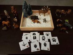 """Nous avons découvert les empreintes des animaux de la forêt. Nous avons fait des empreintes avec nos figurines sur la """"neige"""" (de la pâte à modeler blanche) et observé les cartes pour voir à quel animal correspond quelle empreinte. Nous sommes également..."""