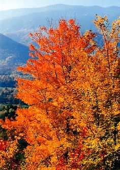 Autumn in the Great Smoky Mountains. We love this area of Tennessee!