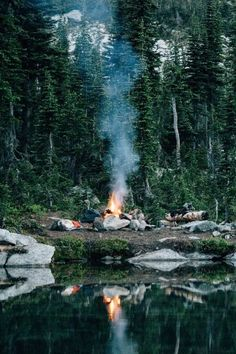 Camping in the forest /