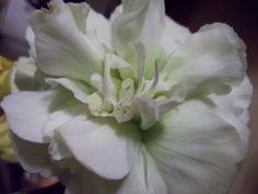 ライトグリーンの花