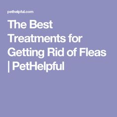 The Best Treatments for Getting Rid of Fleas | PetHelpful