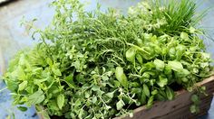Georgia gardener Jaclyn Weldon White offers tips on planting herbs in the Southern garden — and using them to cast a spell if you so desire. Natural Medicine, Herbal Medicine, Herbal Remedies, Natural Remedies, Culture D'herbes, Mint Plants, Types Of Herbs, Healing Herbs, Medicinal Plants