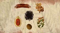 Raras e caras, as especiarias eram muito apreciadas na Europa da Idade Média. As seis mais importantes - pimenta, gengibre, canela, cravo, maças e noz-moscada - vinham de muito longe e davam lucros generosos. Também por isso, os portugueses foram à Índia.