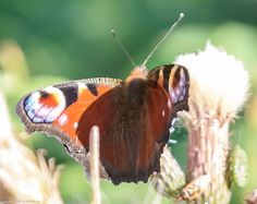 'Details in shade' by oldelphi Moth, Insects, Shades, Animals, Animales, Shutters, Animaux, Animal, Eye Shadow
