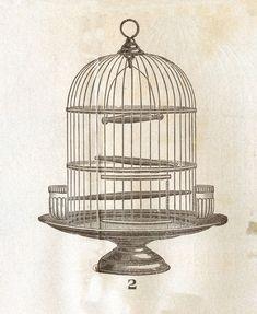 vintage-clip-art-victorian-bird-cage-the-graphics-fairy-B9hhKy-clipart.jpg (1230×1500)