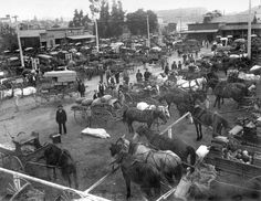Los Angeles Early 1900s