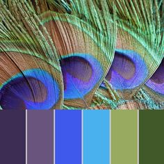 Glitter Paper Pack of Peacock Feathers,Colors of Life, Glitter Digital Papers suitable for scrapboo Peacock Color Scheme, Color Schemes Colour Palettes, Paint Color Schemes, Peacock Colors, Colour Pallette, Color Palate, Peacock Feathers, Color Combinations, Metallic Colors