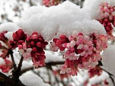 Herb Garden, Outdoor Gardens, Rose, Nature, Flowers, Plants, Gardening, Balcony, Pink