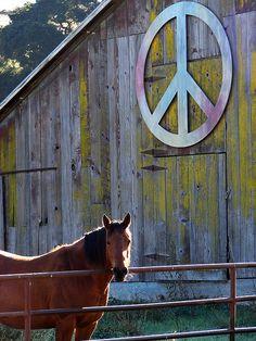 """Okay, that will be """"pinned"""" on my new barn  mydoterra.com/godsoils"""