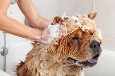 Confira todas as dicas para dar banho no seu pet em casa de maneira segura, tranquila e sem bagunça!