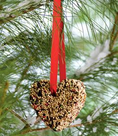 To encourage birds to visit your yard, try hanging a homemade birdseed biscuit. You might want to keep an eye out for feathered friends on Valentine's Day; the 2010 Great Backyard Bird Count is February 12-15, when people across the country spend 15 minutes or more taking stock of the birds in their towns. For tips, tally sheets, and a list of events, go to birdsource.org/gbbc.
