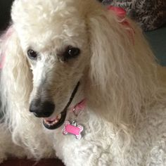 SOPHIE  Looks like our Lola!