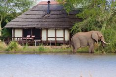 Kruger National Park South Africa safari - This definitive Kruger Park safari accommodation guide offers suggested package tours, day trips, safari lodges Africa Destinations, Honeymoon Destinations, Kruger National Park Safari, National Parks, Private Safari, Wilderness Trail, Safari Holidays, Game Lodge, Game Reserve
