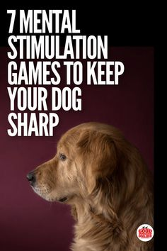 Dog Obedience Training Mental Stimulation Games for Dogs. Dog obedience training comes easier if your dog is mentally active. Check out these fun brain games for dogs. Brain Games For Dogs, Dog Games, Games For Puppies, Tiny Puppies, Dog Minding, Education Canine, Cat Dog, Dog Training Tips, Training Classes