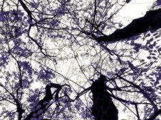 """... improbabile percezione... """"Ramificazioni Astratte"""" - © Fausto Ettore Carbonara"""