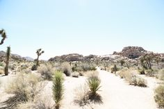 ULTIMATE TRAVEL GUIDE TO JOSHUA TREE - HappyGoLuxe