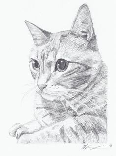 Custom Pet Portrait - Sketch From Your Photo in Pencil - Or Person Portrait on Etsy, $20.00