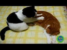 Cute cats - Cat massage therapy 2016 - YouTube