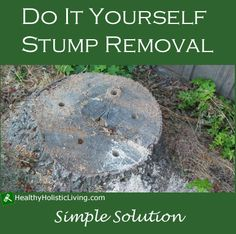 Use Epsom Salts To Rot A Tree Stump Naturally - Charter House Interiors