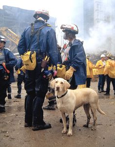 Image detail for -4Paws4Love: Dog Heroes of 9/11